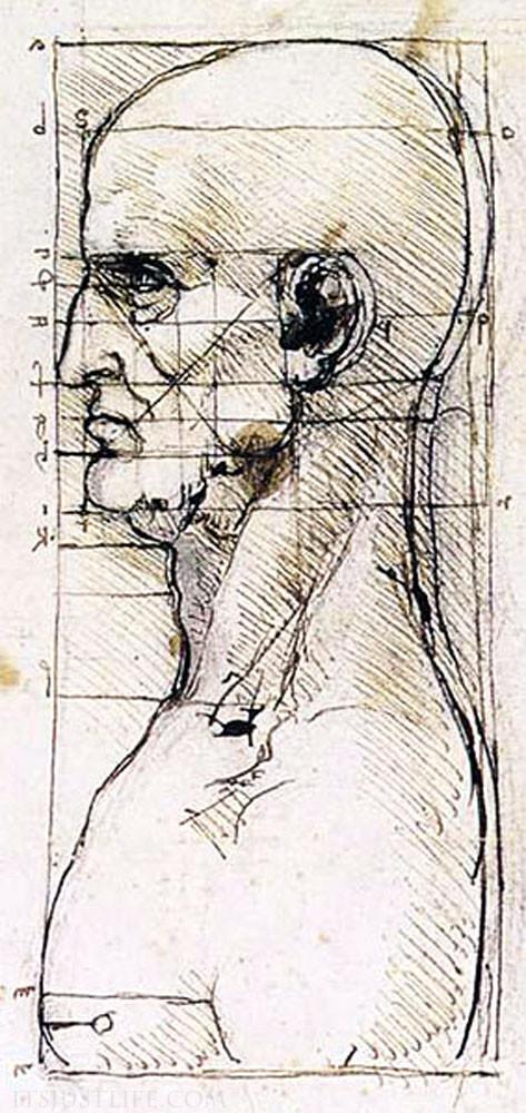 Leonardo da Vinci insan profili oranları