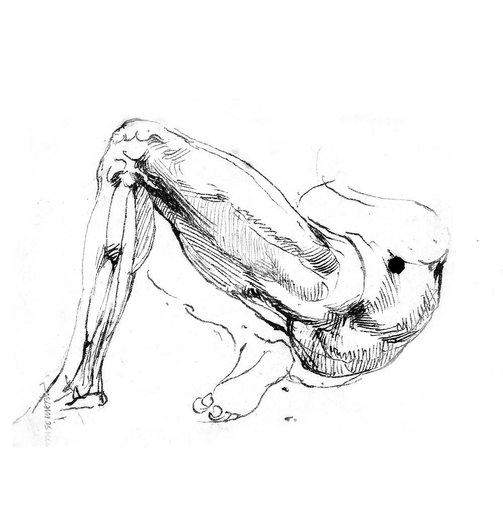 Michelangelo insan vucüdu kas sistemi