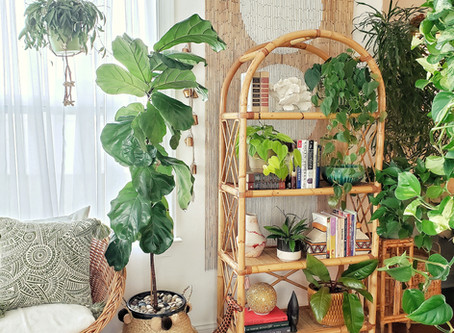How I Created an Eye-Catching Shelfie💚