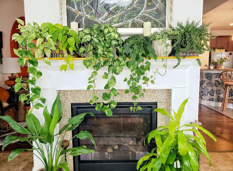 My Top 4 Favorite Houseplants