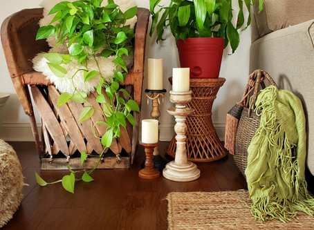 Are Plants Considered Accessories For Your Home? You Bet!
