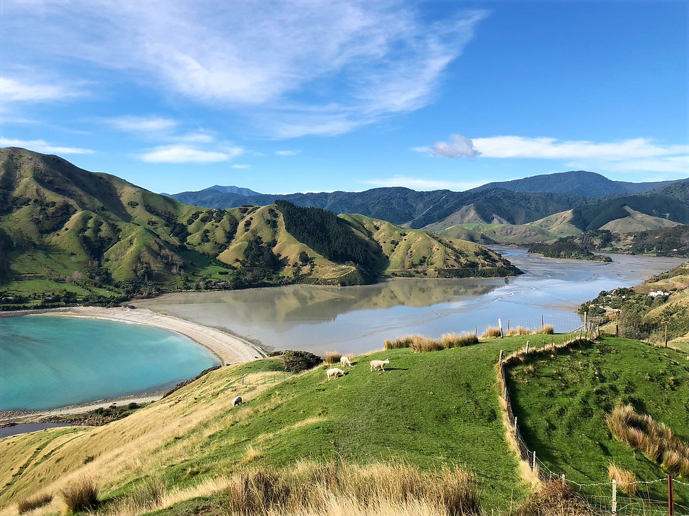 Hiking Rotokura / Cable Bay in South Island New Zealand on a sunny day in winter, travel photography, sheep encounters, traversing over private property, discover new Zealand, driving tour, solo travel, turquoise water of new zealnd, overlooking Cable Bay