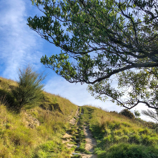 tramping in new zealand, where to hike in south island