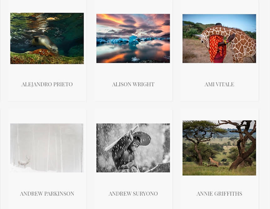 fine art for sale to benefit the environment, wildlife conservationist ami vitale, prints for nature