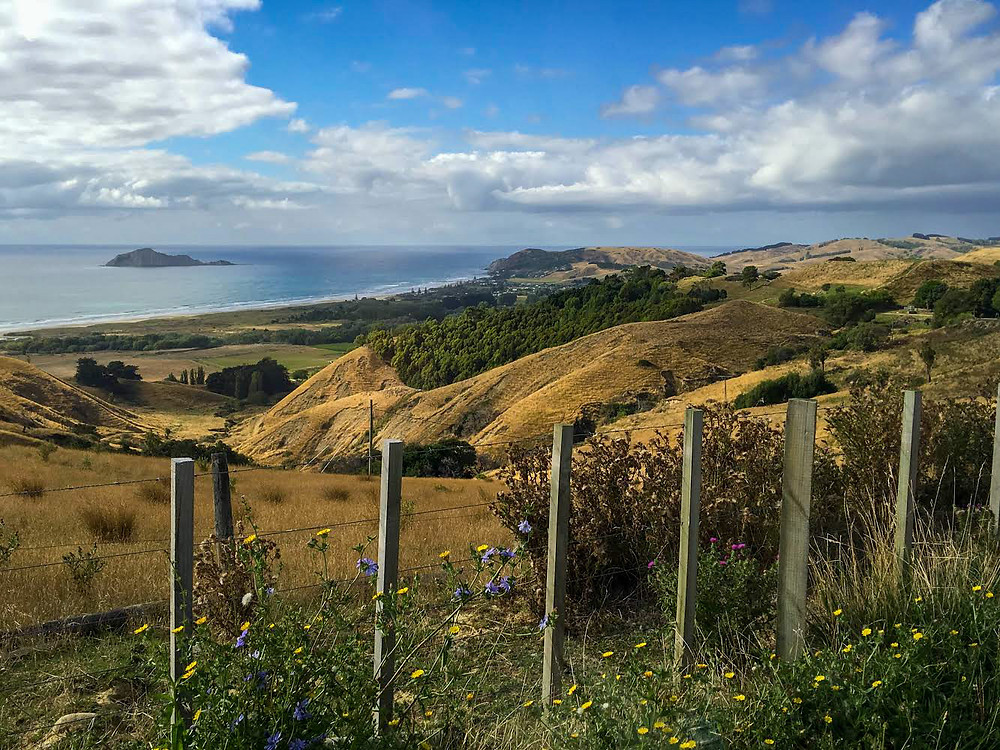 ocean view from hills and flowers overlooking blue water of waimarama beach in Hawke's Bay north island new zealand on a sunny summer day, dine drink discover, travel with parched, discover new zealand, ocean view, New Zealand beaches
