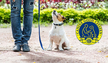 AKC-Canine-Good-Citizen-Certification-Ev
