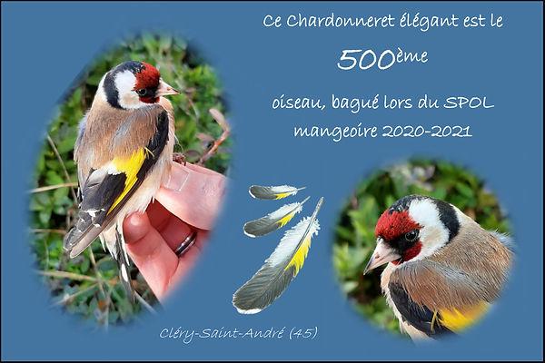 ChardoOiseauN-500-SpolMangeoireCSA-2020-
