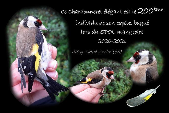 ChardoN-200-SpolMangeoireCSA-2020-2021-C