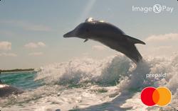ImageNPay dolphin digital prepaid card