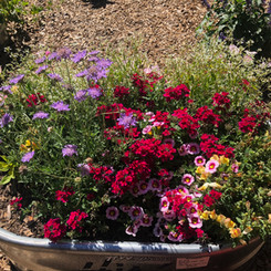 One of our Summer BloomBins®