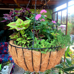 Hanging planter baskets are fun to design and add brillant pops of color and texture to your spaces.