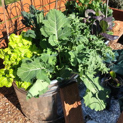 Container gardening is an efficient way to create four seasons of beauty and nutrition to your front or back yards.