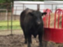 bull'.jpg