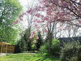 Garten mit Kirsche.jpg