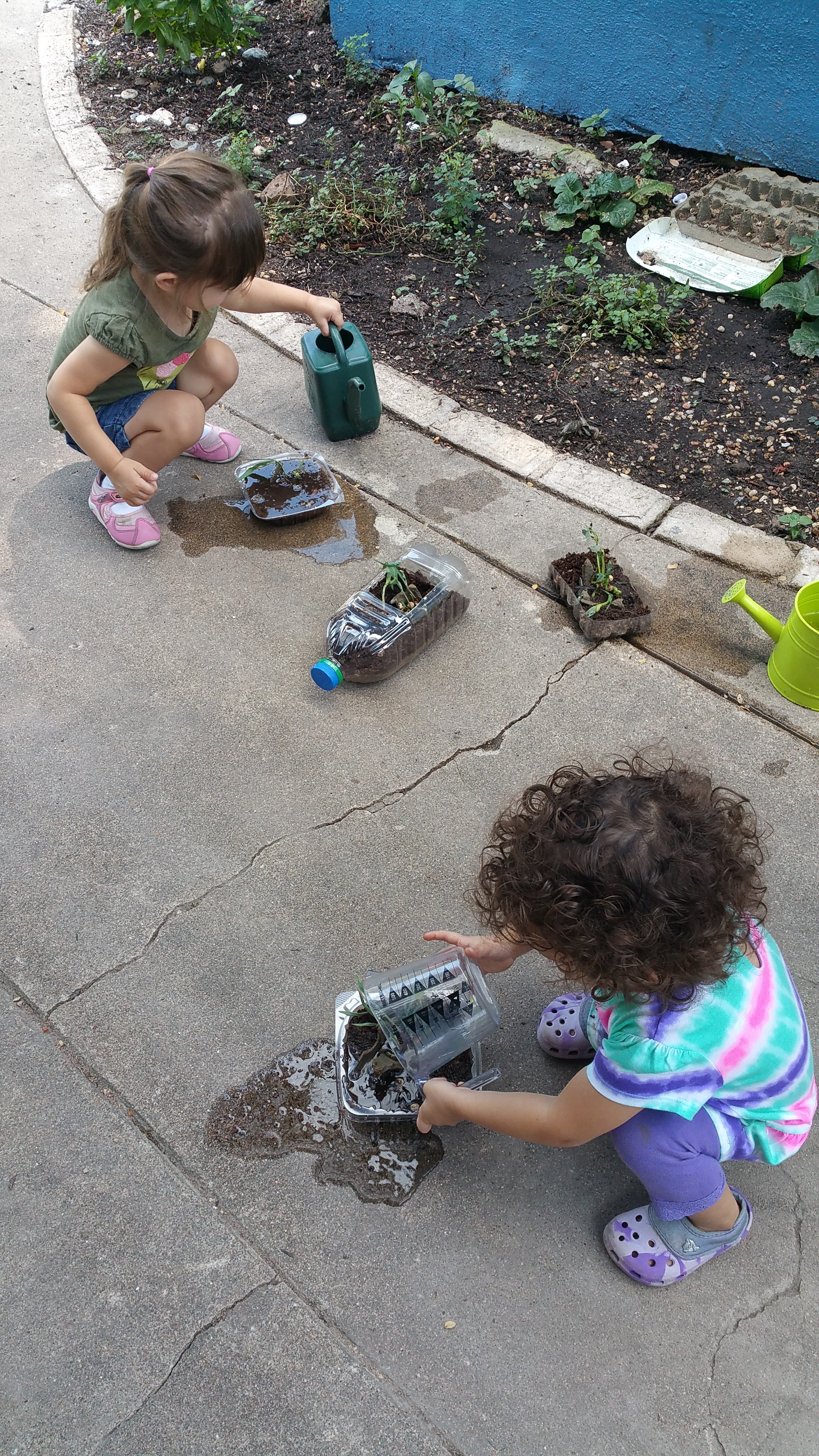 Planting our sprouts!