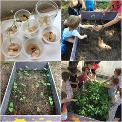 Seed Germination To Cultivation!