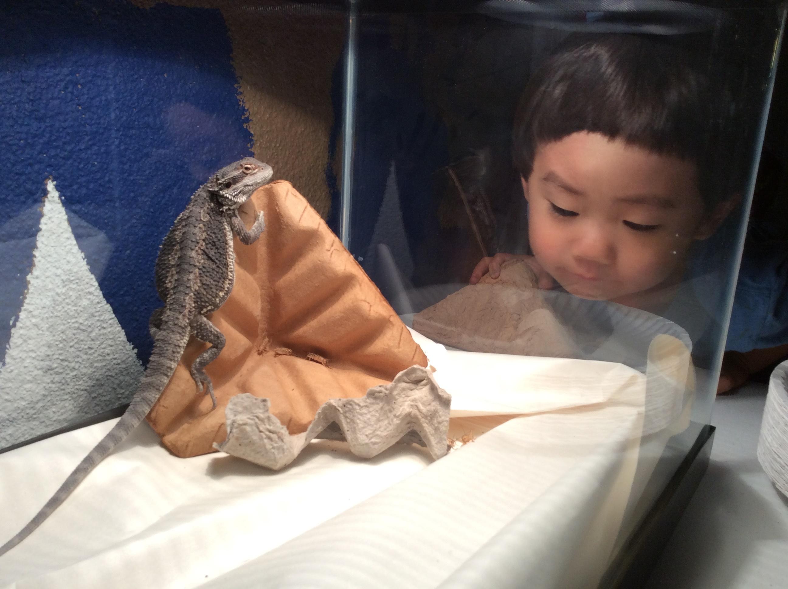 Lizard Observation