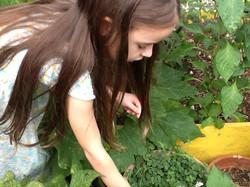 Harvesting Herbs from Garden