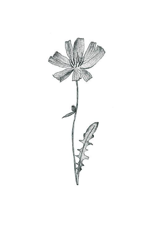 Fleur 1.jpg