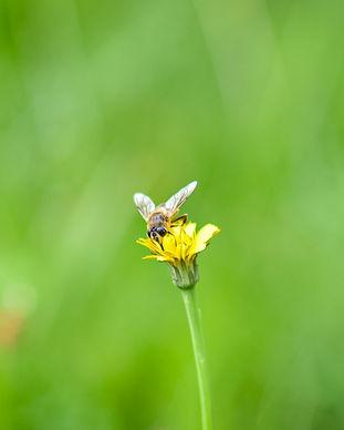 Biodiversité commune