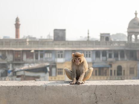 Gewürzmarkt Affe