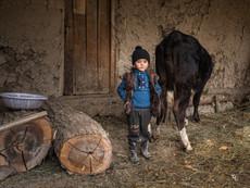 Kirgistan - kleiner Junge mit seiner Kuh