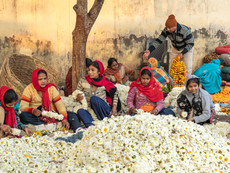 Flower Market Delhi Daisies