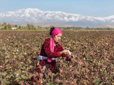 Kirgistan - Baumwollpflückerin