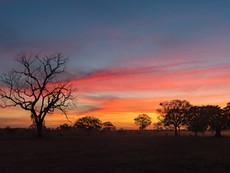 Pantanal Sonnenuntergang
