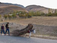 Kirgistan - kleiner Esel, große Last