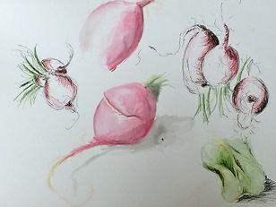 junges Gemüse zeichnen.jpeg