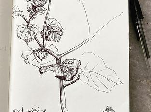 Pflanze gezeichnet.jpeg