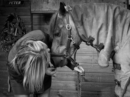 Happy Horses....