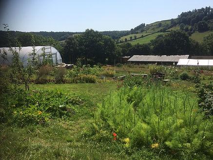 orchard garden.jpg