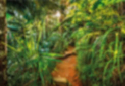 8-989_jungle_trail_web.jpg