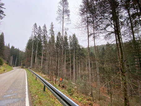 FBG Seewald beantragt 65.000€ Fördermittel für Aufarbeitungshilfe und Käfermonitoring