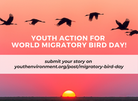 Youth Action for World Migratory Bird Day - submit your contribution!