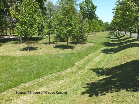 Long grass in Czech cities to protect insects