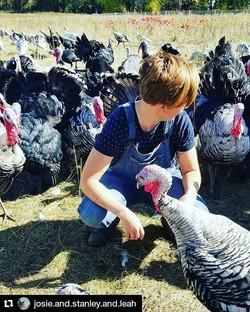 The farm day, by Leah Gosman