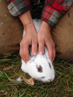 Calming the Rabbits