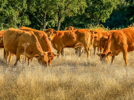Animal agriculture and climate change: our view