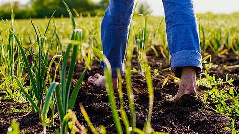 WALKING_BAREFOOT_FARM.jpg