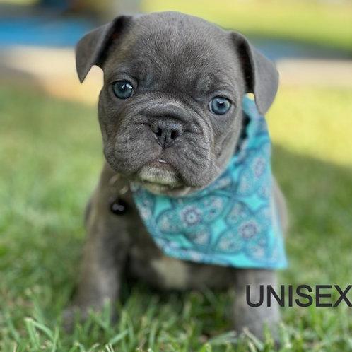 Doggy Bandana Unisex