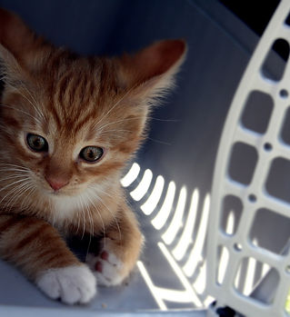 cat-5047346_1920.jpg