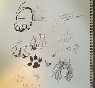 Drawings-DRAFTS.jpg