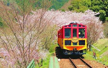sagano-train-sakura.jpg