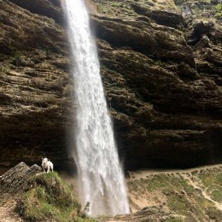 cascade-slovenie-dog-trotteuse.jpg