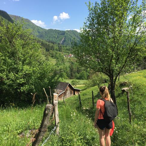 road-trip-slovene-dog-trotteuse.jpg