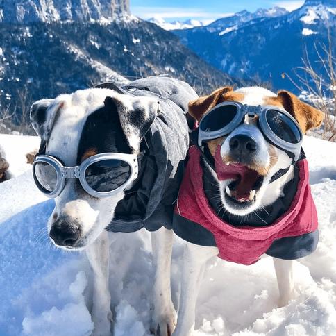 haute-savoie-hiver-chien.png