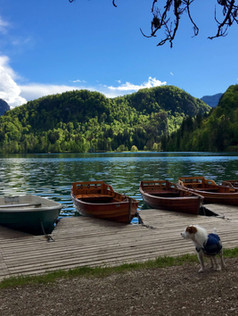 lac-bled-dog-trotteuse.jpg